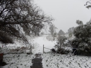 20150713 snow day 2 - view from the front dooe