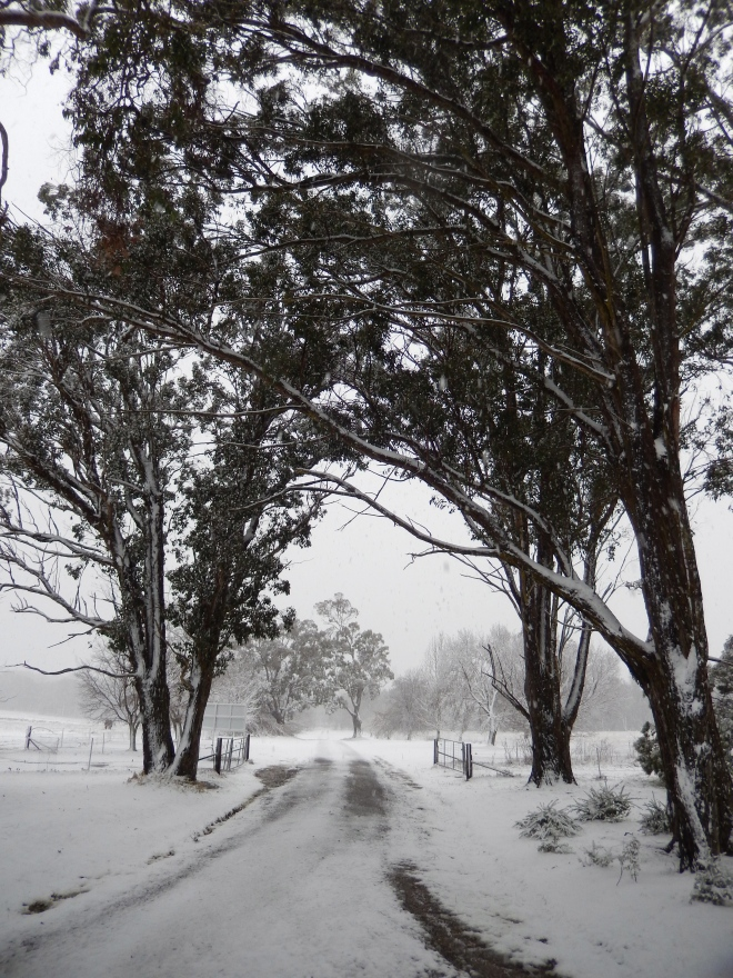 20150713 snow day 2 - front drive